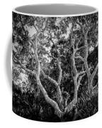 Florida Scrub Oaks Bw   Coffee Mug