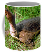 Florida Softshell Turtle Apalone Ferox Coffee Mug