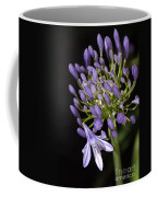 Flower- Agapanthus-blue-buds-one-flower Coffee Mug