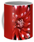 Flower- Dahlia-red-white Coffee Mug