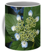 Flowers At Soos Creek Botanical Garden II Coffee Mug