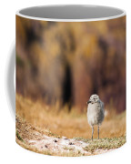 Fluffball Watching Coffee Mug by Anne Gilbert