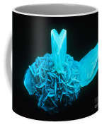 Fluorescing Selenite Gypsum Coffee Mug