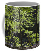 Forest Cathedral Coffee Mug