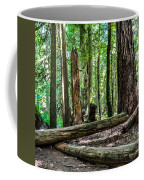 Forest Of Cathedral Grove Collection 2 Coffee Mug