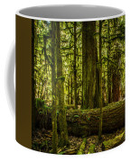 Forest Of Cathedral Grove Collection 3 Coffee Mug