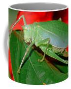 Fork-tailed Bush Katydid Coffee Mug