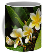 Four Summer Frangipanis Coffee Mug