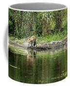 Fox At Water Hole Coffee Mug