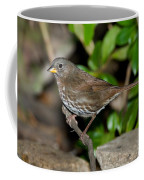 Fox Sparrow Coffee Mug