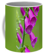 Foxglove Digitalis Purpurea Coffee Mug