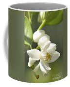 Fragrant Orange Blossoms Coffee Mug