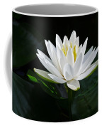 Fragrant Water-lily Coffee Mug