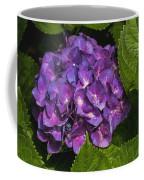 Framed Purple Blue Hydrangea Blossom Coffee Mug