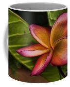 Frangipani Creation Coffee Mug
