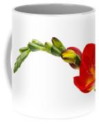 Freesia On White Coffee Mug
