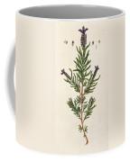 French Lavender Coffee Mug
