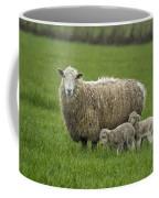 Freshly Made - Winter Lambs Coffee Mug