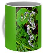 Fringe Cups On Clatsop Loop Trail In Ecola State Park-oregon Coffee Mug