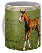 Frisky Colt Coffee Mug
