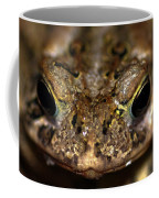 Frog 2 Coffee Mug by Optical Playground By MP Ray