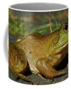 Frog At Night Coffee Mug