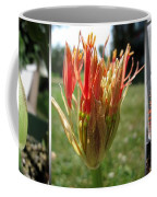 From Bud To Bloom - African Blood Lily Coffee Mug