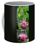 From Bud To Bloom - Bee Balm Named Panorama Pink Coffee Mug