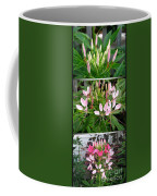 From Bud To Bloom - Cleome Named Pink Queen Coffee Mug