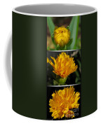 From Bud To Bloom - Coreopsis Named Early Sunrise Coffee Mug