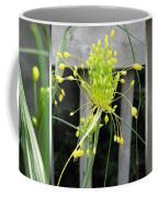 From Bud To Bloom - Fireworks Allium Coffee Mug