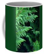 Fronds Of The Leyland Cypress Coffee Mug