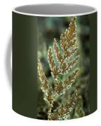 Frosted Fern Coffee Mug