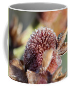 Frozen Dew Drops Melt From Canna Lily Seed Pods Coffee Mug