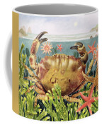 Furrowed Crab With Starfish Underwater Coffee Mug by EB Watts