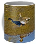 Gadwall Drake On Mudflat Coffee Mug