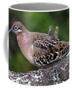 Galapagos Dove Galapagos Islands National Park Santa Cruz Island Coffee Mug