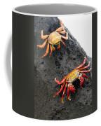 Galapagos Islands 02 Coffee Mug