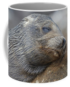 Galapagos Sea Lion Sleeping Coffee Mug