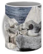 Galapagos Seagull And Her Chick Coffee Mug