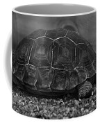Galapagos Tortoise Baby Coffee Mug