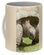 Galapagos Turtle Coffee Mug