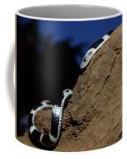 Garter Snake Genus Elapsoidea Coffee Mug