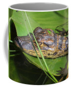 Gator Baby's Head Coffee Mug