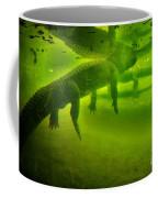 Gator Reflection Coffee Mug