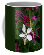 Gaura Lindheimeri Whirling Butterflies With Agastache Ava Coffee Mug