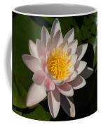 Gently Pink Waterlily In The Hot Mediterranean Sun Coffee Mug