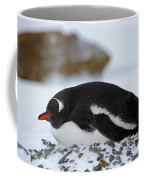 Gentoo Penguin On Nest Coffee Mug