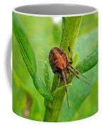 Genus Araneus Orb Weaver Spider - Brown And Orange Coffee Mug