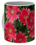 Gerber Daisies Cluster Coffee Mug